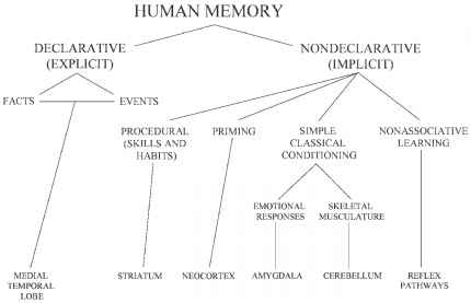 Long Term Memory Explicit And Implicit