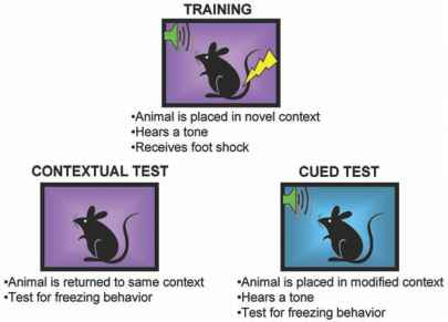 Classical Fear Conditioning