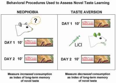 Conditioned Taste Aversion Mice